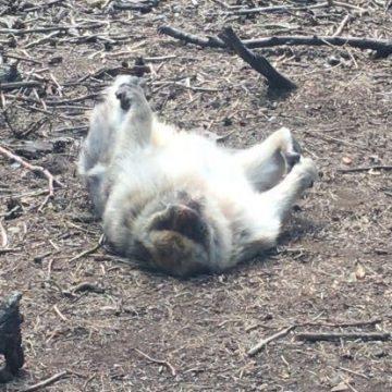 So sieht ein entspannter Affe aus.